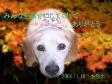 61114犬ちゃん