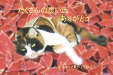 81220ミーコちゃん